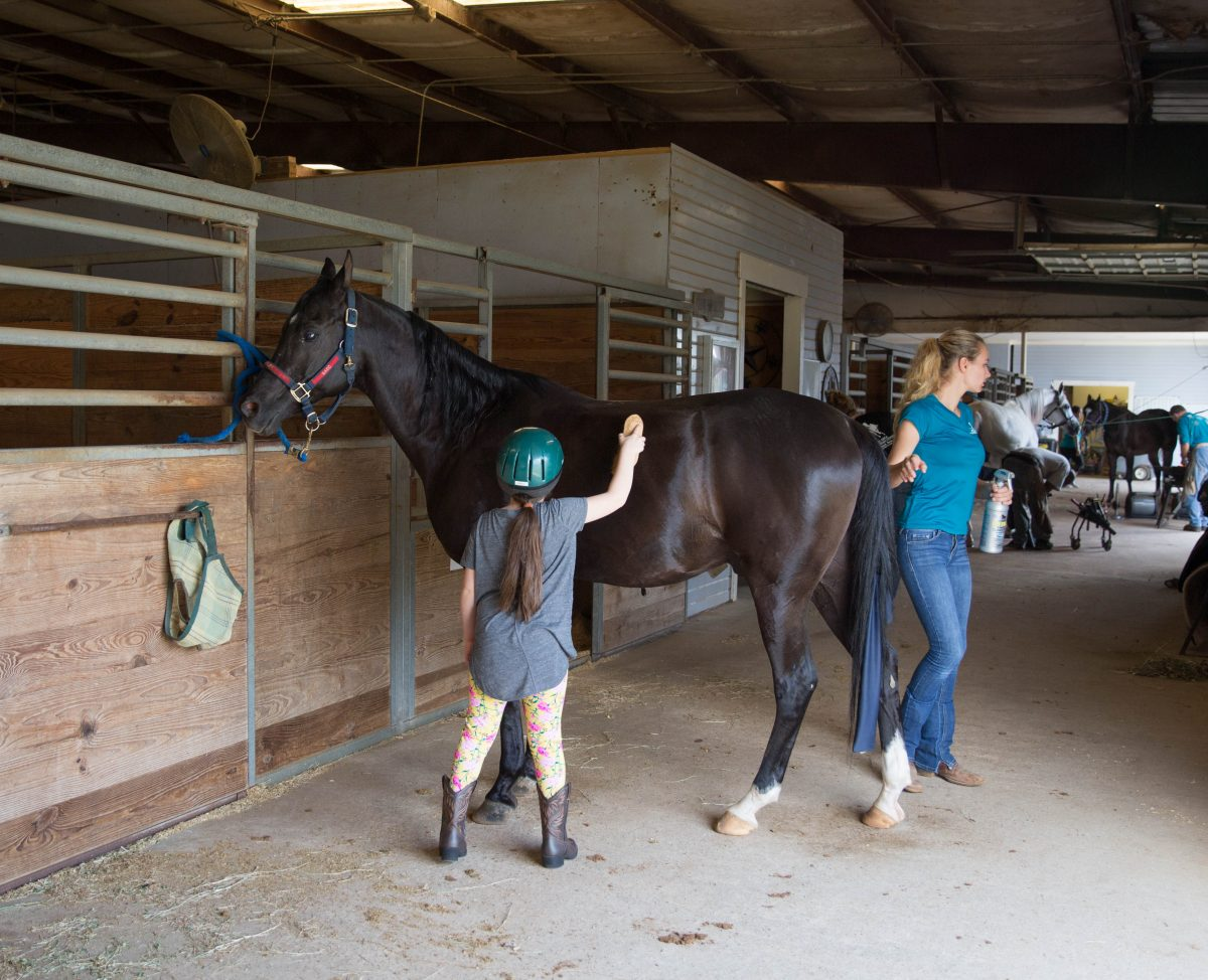 Horseback Lessons: Lessons Learned