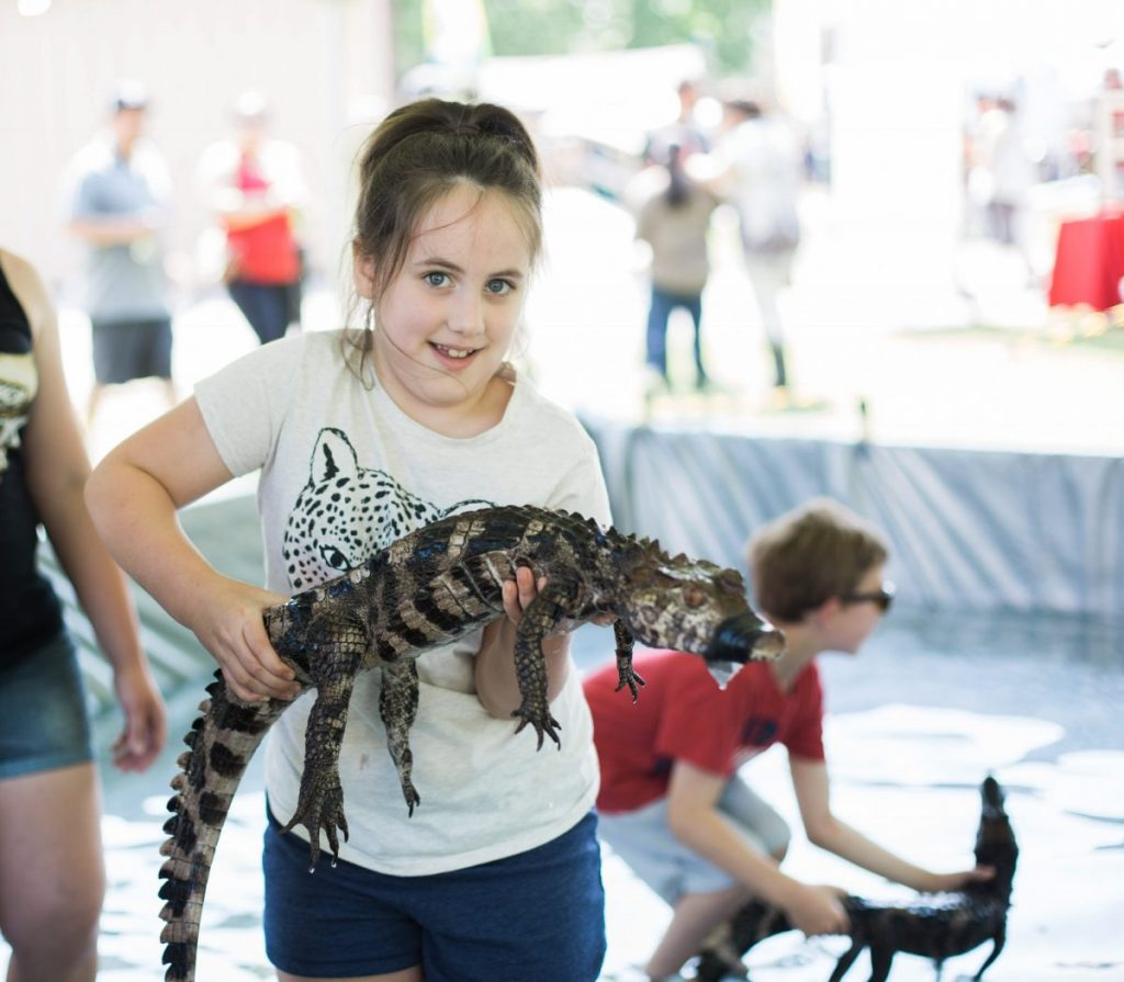holding alligator at texas crawfish and music festival in old town spring 2018 houston lifestyle blogger mom blog