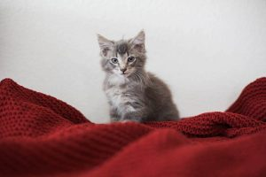 Did You Know These 25 Common Household Items are Toxic to Cats?